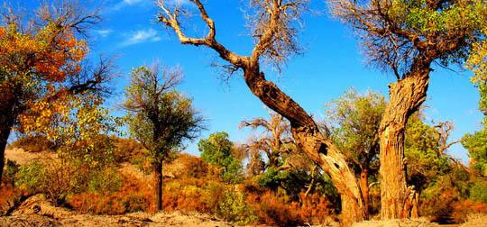 塔里木盆地的塔克拉